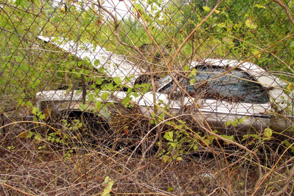 cash for junk cars austin
