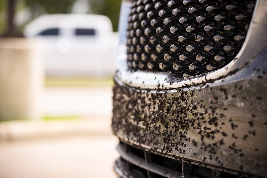 Removing Bugs from a Car – Here's What You Need To Know